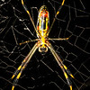 Spider Sat Down Beside Her - Copyright 2016 Steve Leimberg - UnSeenImages Com _Z2A5544
