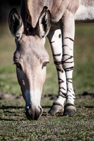 Look at Them Legs - Copyright 2016 Steve Leimberg - UnSeenImages Com _A6I2480