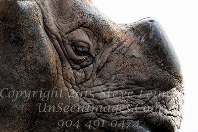 Rhino Profile - Copyright 2016 Steve Leimberg - UnSeenImages Com _A6I4723