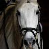 Jennifer Jolle-Rodriegues and Luna - Littleberry Farms - Copyright 2014 Steve Leimberg - UnSeenImages Com _H1R3598