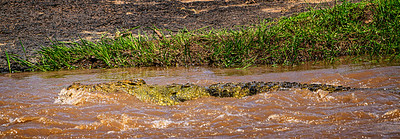Croc Kenya Copyright 2020 Steve Leimberg UnSeenImages Com _DSC5206