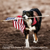 Joey The Border Collie - Copyright 2014 Steve Leimberg - UnSeenImages Com _H1R3772