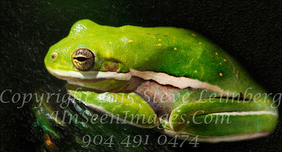 Frog - Copyright 2017 Steve Leimberg UnSeenImages Com _Z2A9144