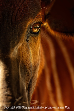 The Eyes Have It - Copyright 2018 Steve Leimberg UnSeenImages Com _Z2A5643