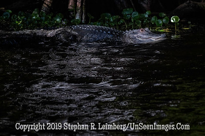 Is That a Log or Is it     Copyright 2019 Steve Leimberg UnSeenImages Com _A6I9060