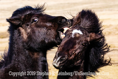 Caught in the Act Copyright 2019 Steve Leimberg UnSeenImages Com _Z2A7767