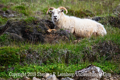 Another Tourist Looking at Me  Copyright 2019 Steve Leimberg UnSeenImages Com _Z2A5647
