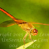 Red Dragonfly - PAINTING - Copyright 2016 Steve Leimberg - UnSeenImages Com _A6I4185