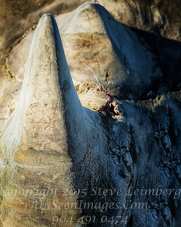 Sharp End of the Stick - Copyright 2016 Steve Leimberg - UnSeenImages Com _A6I3835
