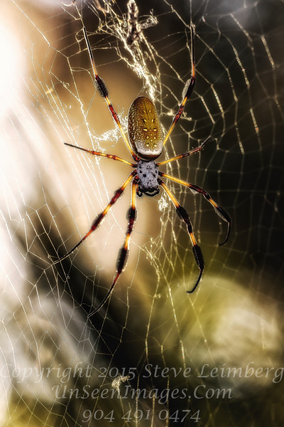 Along Came a Spider - Copyright 2016 Steve Leimberg - UnSeenImages Com _Z2A6891