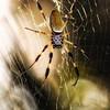 Along Came a Spider - Copyright 2016 Steve Leimberg - UnSeenImages Com _Z2A6891