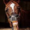 The Neighs Have It - Copyright 2016 Steve Leimberg - UnSeenImages Com _Z2A5750