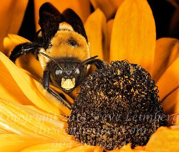 Bee Copyright 2018 Steve Leimberg UnSeenImages