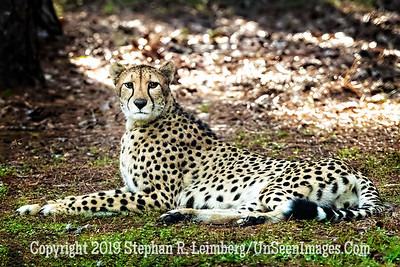 Momma Watching Cubs - Copyright 2018 Steve Leimberg UnSeenImages Com _A6I4811