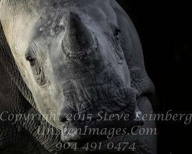 Rhino Too Close for Comfort - Copyright 2016 Steve Leimberg - UnSeenImages Com _A6I3734