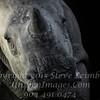 Rhino Too Close for Comfort - Copyright 2016 Steve Leimberg - UnSeenImages Com _A6I3734