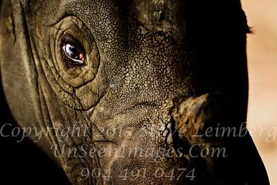 Rhino Horn White Oak - Copyright 2016 Steve Leimberg UnSeenImages Com _20110328_1673