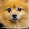 Leo Robert Leedy's Parent's Dog - Jacksonville - Copyright 2014 Steve Leimberg - UnSeenImages Com _H1R1459