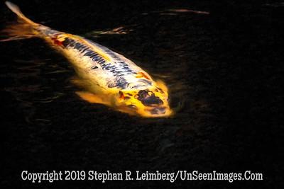 Koy - Copyright 2019 Steve Leimberg UnSeenImages Com _A6I9972