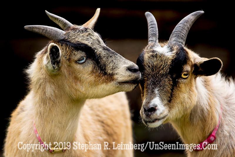The Kiss - Celestial Farms - Copyright 2015 Steve Leimberg - UnSeenImages Com _H1R2815