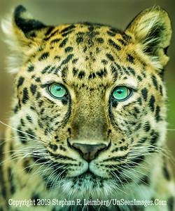 Jaguar _H1R1336