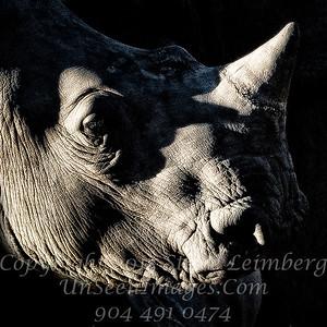 Rhino - Copyright 2016 Steve Leimberg - UnSeenImages Com _A6I3708