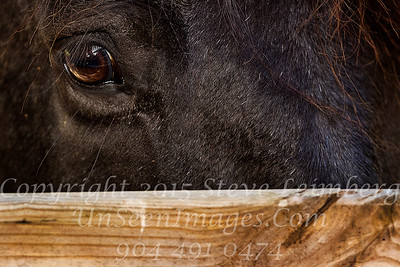 Horse Peeking Out - Copyright 2016 Steve Leimberg - UnSeenImages Com _A6I3869