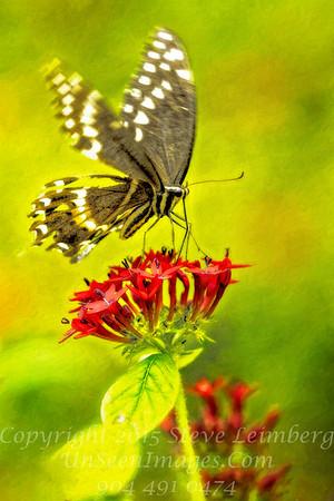 Butterfly - Copyright 2016 Steve Leimberg - UnSeenImages Com _Z2A9396