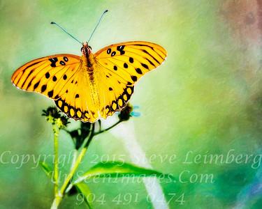 Butterfly - Copyright 2016 Steve Leimberg - UnSeenImages Com _A6I1031