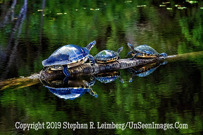 Standoff Copyright 2019 Steve Leimberg UnSeenImages Com _A6I0335