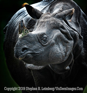 Loving Mother Rhino - Copyright 2018 Steve Leimberg UnSeenImages Com _Z2A2766