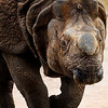 Rhino - Copyright 2016 Steve Leimberg - UnSeenImages Com _A6I4896