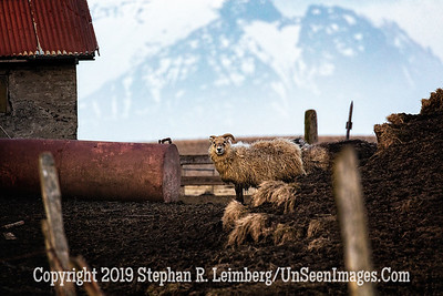 Ram at Home Copyright 2019 Steve Leimberg UnSeenImages Com _Z2A8697