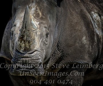 Rhino in Your Future Copyright 2016 Steve Leimberg - UnSeenImages Com  _H1R2161