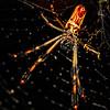 Spider Sat Down Besider Her - Copyright 2016 Steve Leimberg - UnSeenImages Com _Z2A7192