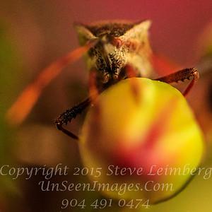Alien - Copyright 2017 Steve Leimberg UnSeenImages Com _Z2A7769