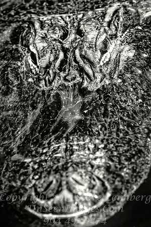 Alligator - B&W Copyright 2016 Steve Leimberg - UnSeenImages Com _Z2A9378