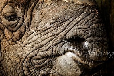 Rhino Mouth - Copyright 2016 Steve Leimberg - UnSeenImages Com _A6I4774