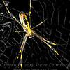 Spider Beside Her II - Copyright 2016 Steve Leimberg - UnSeenImages Com _Z2A5528