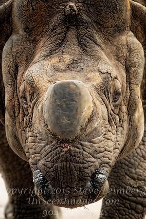 Rhino - Copyright  2016 Steve Leimberg - UnSeenImages Com _A6I4912
