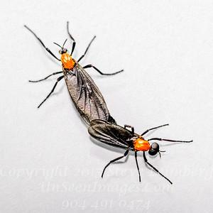 Love Bugs - Copyright 2017 Steve Leimberg UnSeenImages Com _Z2A7777