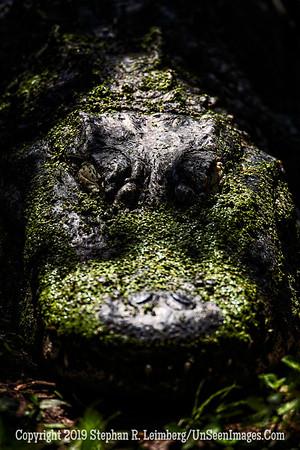 Heart of Darkness Copyright 2019 Steve Leimberg UnSeenImages Com _A6I6791