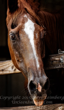Horse of Course - Copyright 2016 Steve Leimberg - UnSeenImages Com _Z2A5748