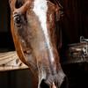Horse of Course - Copyright 2016 Steve Leimberg - UnSeenImages Com _Z2A5748