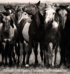 Group Portrait - B&W Copyright 2019 Steve Leimberg UnSeenImages Com _Z2A6530