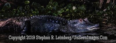 Not a Log Copyright 2019 Steve Leimberg UnSeenImages Com _A6I9074