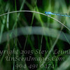 Blue Dragonfly - PAINTING - Copyright 2016 Steve Leimberg - UnSeenImages Com _Z2A8664