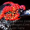 Yum Yum - Copyright 2016 Steve Leimberg - UnSeenImages Com _Z2A5991