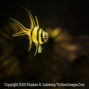 Mello Yellow - Copyright 2014 Steve Leimberg - UnSeenImages Com _H1R2529