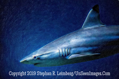 Shark Painting - Copyright 2014 Steve Leimberg - UnSeenImages Com _H1R2814